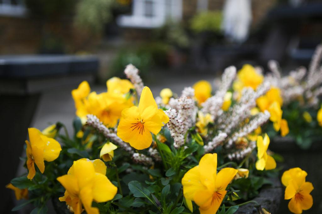 Flowers in the beer garden